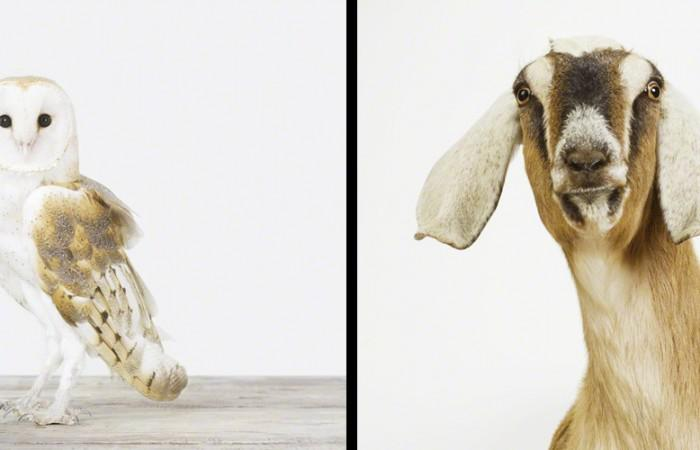 Artistic Animal Photography by Sharon Montrose