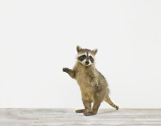 Καλλιτεχνικές φωτογραφίες ζώων της Sharon Montrose.