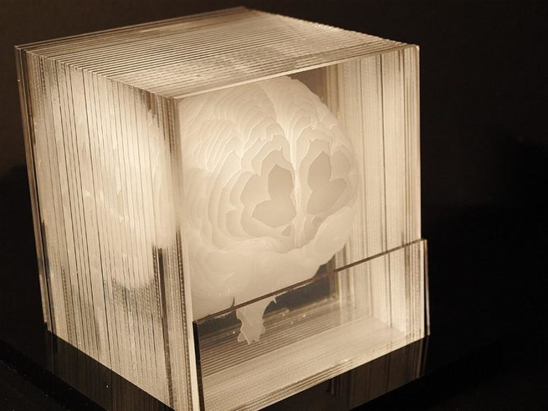 Human brain acrylic sculpture by Northup.