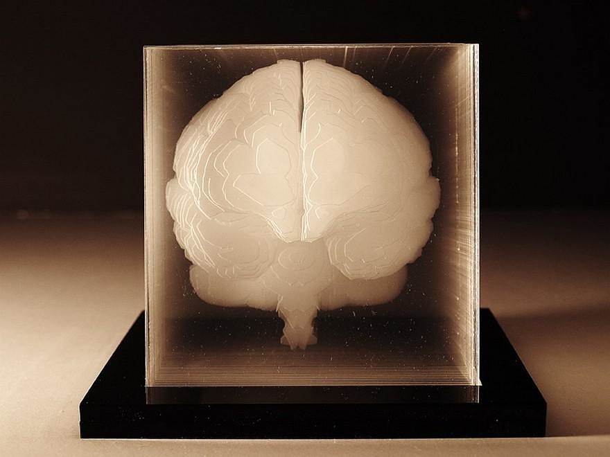 Human Brain Acrylic Sculpture By Northup Design Is This