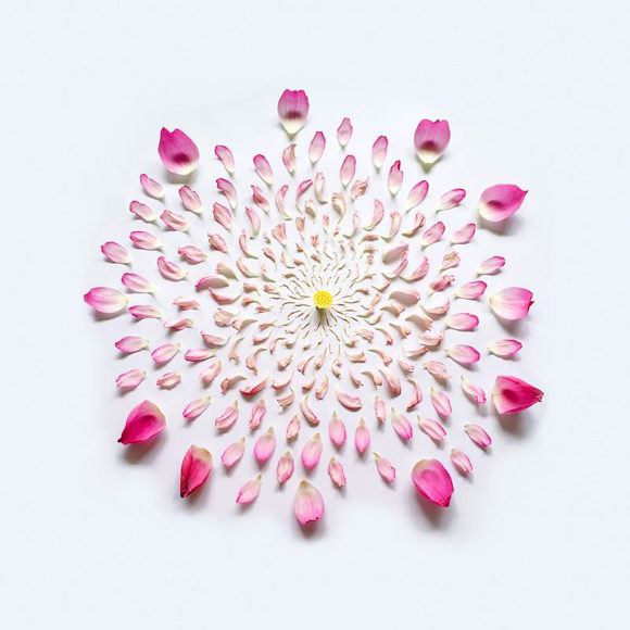 Exploded Flowers από τον Fong Qi Wei.