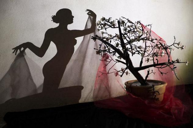 Art with shadows by Teodosio Sectio Aurea