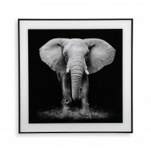 Διακοσμητικό Κάδρο Elephant 50 x 50 εκ. (Λευκό /  Μαύρο) - Versa