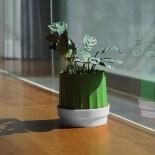 Θήκη για Χαρτομάντηλα ή Ρολό Υγείας & Γλαστράκι Cactiss Πράσινο / Λευκό Qualy