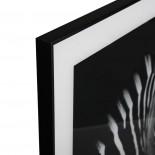 Διακοσμητικό Κάδρο Zebra 50 x 50 εκ. Λευκό / Μαύρο Versa