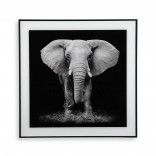 Elephant Framed Wall Art 50 x 50 cm (Glass) - Versa