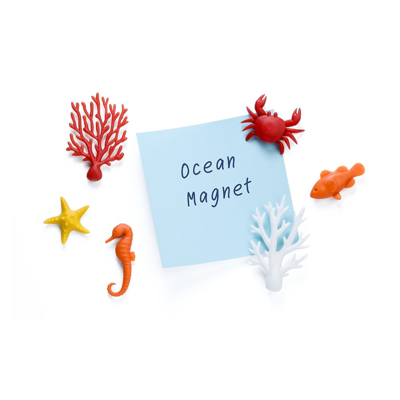 Ocean Ecology Magnets (Set of 6) - Qualy