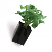 Off the Wall Pot Small (Black) - Thelermont Hupton