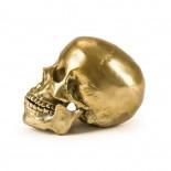 Wunderkammer Human Skull Culture Skulture - Seletti