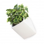 Off the Wall Pot Large (White) - Thelermont Hupton