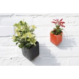 Off the Wall Pot Small (Orange) - Thelermont Hupton
